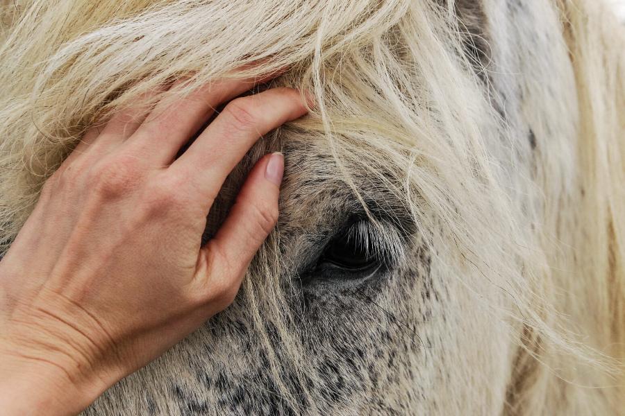 9 redenen waarom paardencoaching zo waardevol is